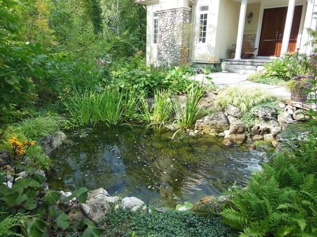 L'eau stagnante : lieu de reproduction des moustiques
